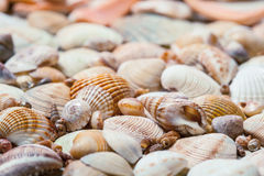 Seashells background Royalty Free Stock Photography