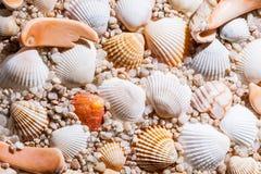Seashells background - macro shot Stock Photography