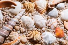 Seashells background Royalty Free Stock Photos