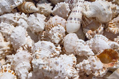 Seashells background, macro shot of beautiful Royalty Free Stock Photos