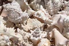 Seashells background, macro shot of beautiful Royalty Free Stock Photography