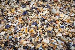 Seashells background. Many sea shells on a beach summer backgrou royalty free stock photography