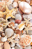Seashells background. Background of pebbles, different shells and starfishes. Focus on white starfishes and some other shells royalty free stock photo