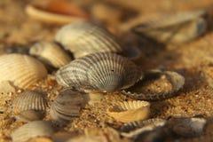 Seashells. Background sea shells recreation, tourist, travel, holiday Stock Photos