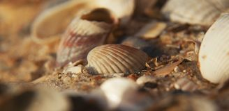 Seashells. Background sea shells recreation, tourist, travel, holiday Stock Photo