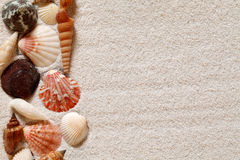 Seashells Background Royalty Free Stock Photo