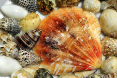 Seashells background Stock Photos