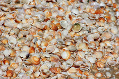 Seashells background Stock Photo