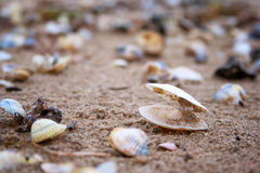 Seashells on the baltic sea Stock Images