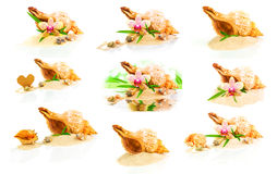 Seashells, bamboo and orchid collage Royalty Free Stock Photo