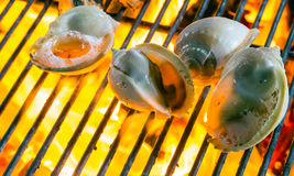 Seashells Barbecue Grill cooking seafood. Royalty Free Stock Image