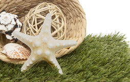Seashells in basket on grass. Seashells and starfish in basket on green grass Royalty Free Stock Photo