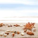 Seashells on a beach Stock Image