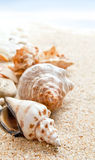 Seashells on a beach Stock Photos