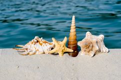 Seashells on the beach. Blue sea,summer holidays royalty free stock images