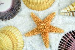 Seashells on the beach. Set of seashells on the beach stock photo