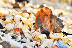 Seashells on the beach Stock Photos