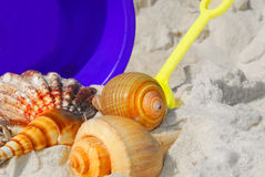 Seashells on beach Royalty Free Stock Photography