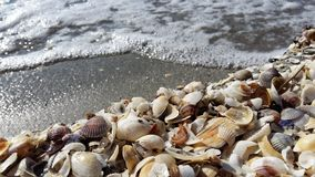 Seashells. On the beach Royalty Free Stock Image
