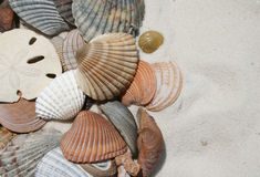 Seashells on the beach. Seashells sand-dollar, and coral in the sand stock photography