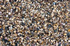 Seashells on the beach. Background with small seashells and stones Stock Images