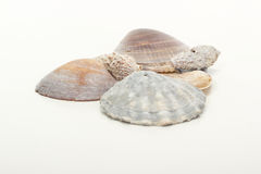 Seashells at the beach Stock Photo