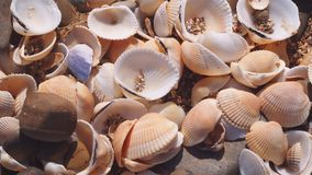 Seashells on the beach. Beautiful seashells on the beach closeup. Summer day Stock Photography