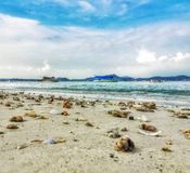Seashells at beach Stock Photo