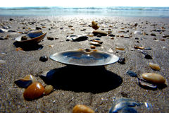 Seashells on the beach. Beautiful seashells on the beach, United States Royalty Free Stock Image