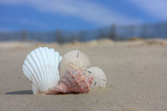 Seashells on Beach with Fence Royalty Free Stock Photography