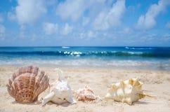 Seashells on a beach. Few seashells on a sandy beach by the ocean Stock Images