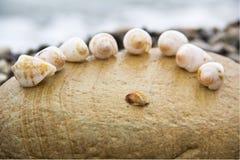 Seashells on the beach Royalty Free Stock Photography