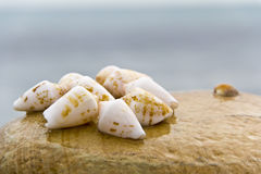 Seashells on the beach Royalty Free Stock Photo