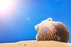 Seashells on the beach. Sand Royalty Free Stock Photo