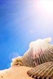 Seashells on the beach. Sand Stock Photography