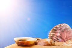 Seashells on the beach. Sand Stock Photos