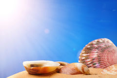Seashells on the beach Stock Photos