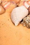 Seashells on the beach Royalty Free Stock Images