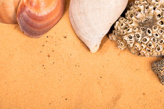 Seashells on the beach stock images