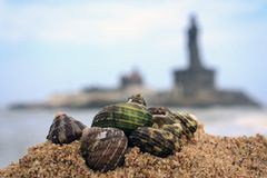 Seashells on the beach sand, Kanyakumari. Seashells lying on the beach sand at Kanyakumari. In the background is the blurred monuments of Vivekananda Rock Royalty Free Stock Photo