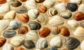 Seashells  on the  beach sand Royalty Free Stock Images