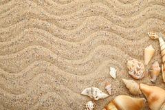 Seashells. On the beach sand royalty free stock photos