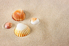 Seashells on beach sand Stock Images