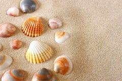 Seashells on beach sand Stock Photos