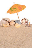 Seashells in beach sand on a white Stock Image