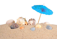 Seashells in beach sand on a white Royalty Free Stock Photography