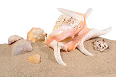 Seashells in beach sand on a white Royalty Free Stock Image