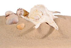 Seashells in beach sand on a white Royalty Free Stock Photos