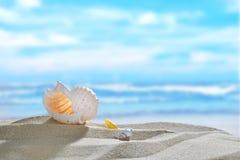Seashells on the beach Royalty Free Stock Photos