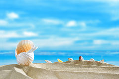 Seashells on the beach Stock Image